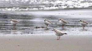 dogblog-ppls at beach
