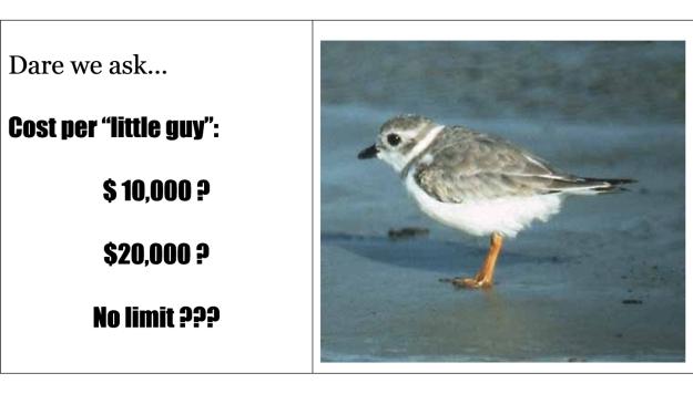 dogblog-cost per bird