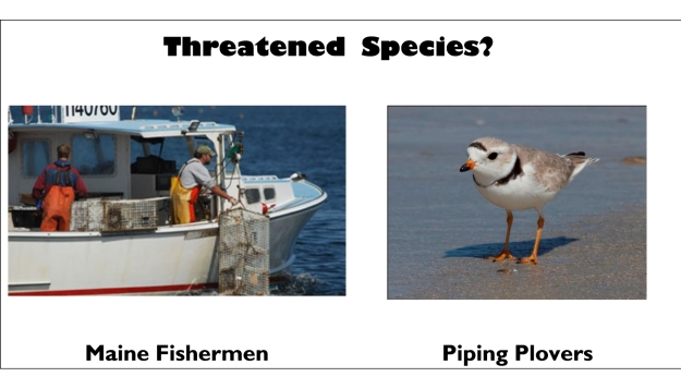 dogblog-threatened species