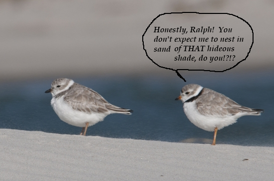 dogblog--two plovers
