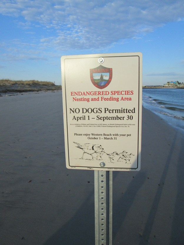 The new sign that went up on Ferry Beach last week.